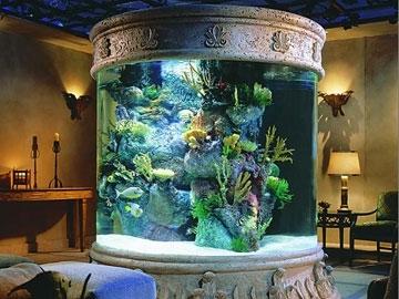 Gu a para armar un acuario con peces de agua dulce taringa - Peceras en casa ...
