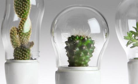 Macetas modernas para cactus