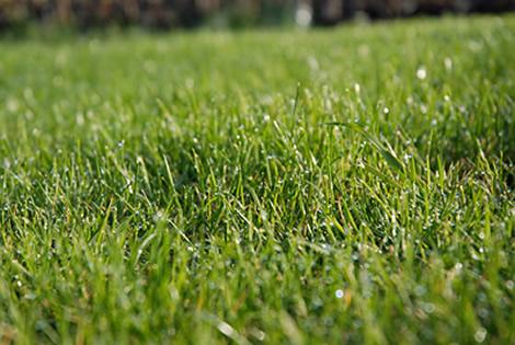 quitar las malas hierbas del jard n