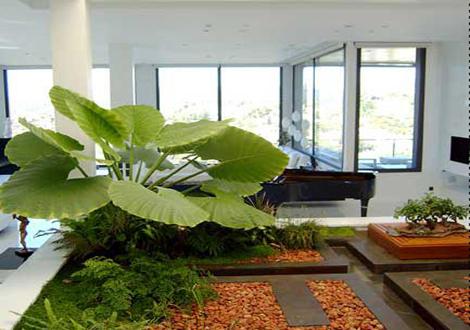 Decorar con plantas - Plantas de interior bonitas ...