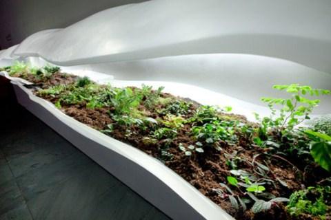 Peque o jard n bot nico en casa for Casa jardin botanico