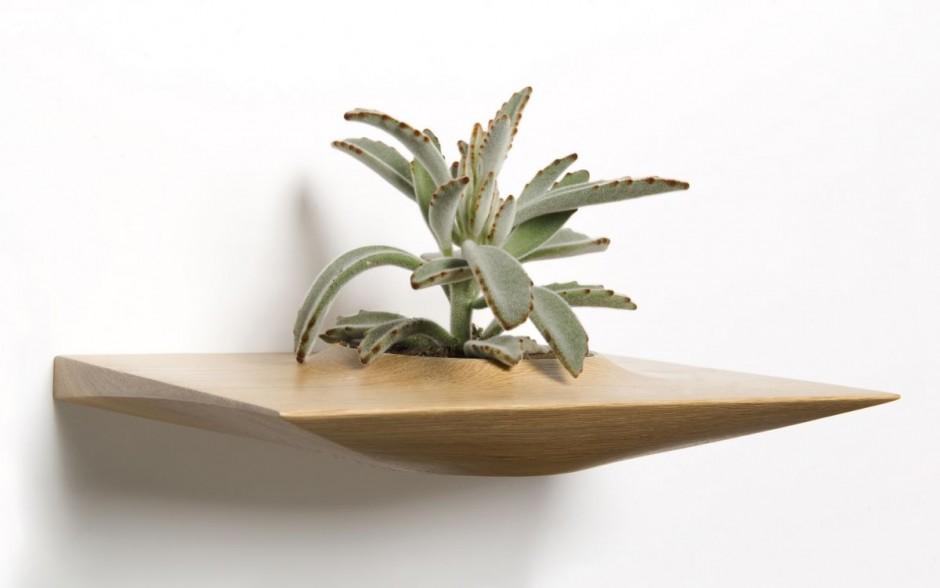 Plantas en la pared por domenic fiorello - Plantas en la pared ...