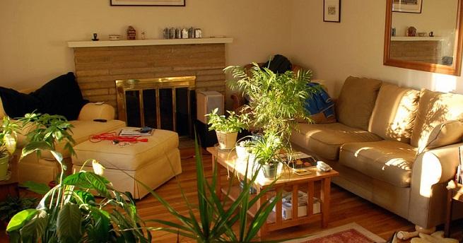 Decorablog revista de decoraci n for Decoracion de casas con plantas naturales