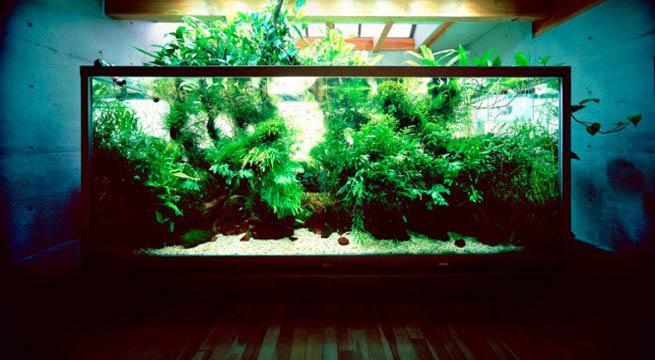 Decorablog revista de decoraci n for Jardines acuaticos