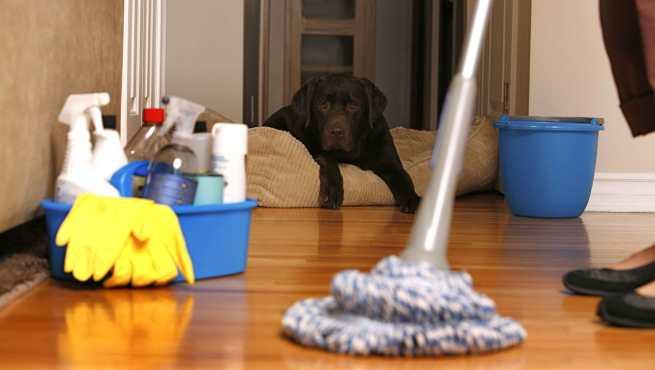 Limpiar la casa de forma r pida y eficaz - Limpiar la casa ...