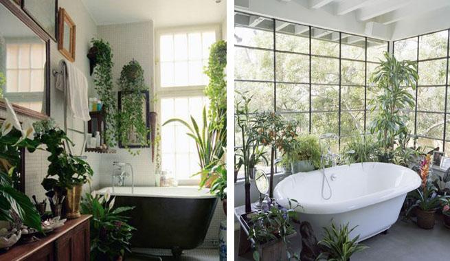 Baño De Tina Con Hierbas:Plantas de interior para decorar el baño