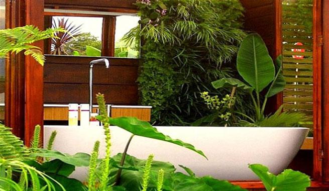 Plantas de interior para decorar el ba o - Plantas de interior tropicales ...