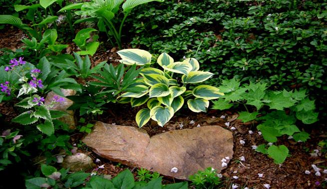 Jardines de rocalla en cualquier espacio for Como hacer un jardin pequeno