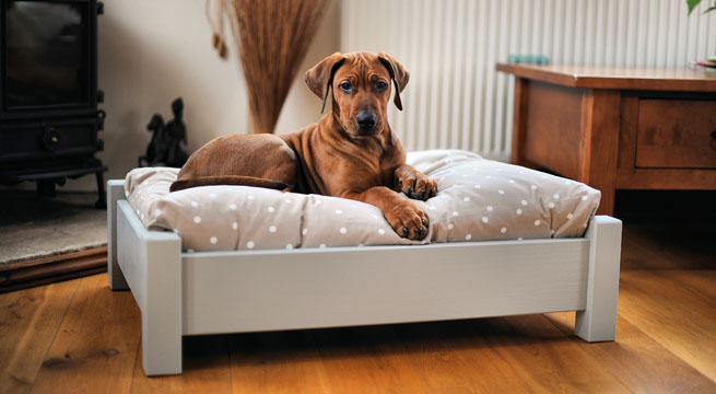 Complementos decorativos para mascotas : Shropshire Wooden Dog Bed from www.decorablog.com size 655 x 360 jpeg 66kB