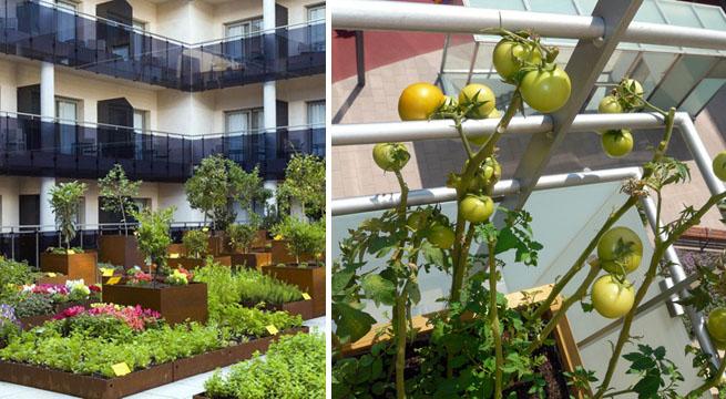 Huertos urbanos en la cocina o el balc n - Imagenes de terrazas con plantas ...