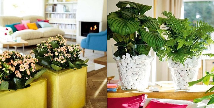 Ideas para decorar con plantas - Plantas para habitacion ...
