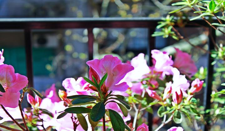 Qu plantas poner en el balc n - Plantas de balcon ...