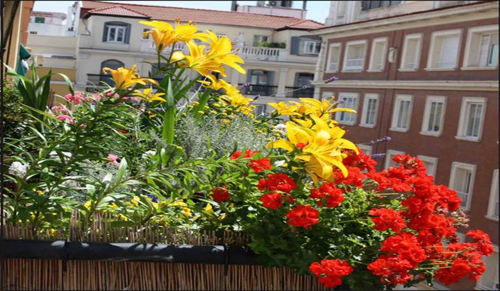 Qu plantas poner en el balc n - Plantas para terrazas con mucho sol ...
