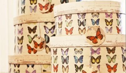 muy mucho mariposas cajas redondas