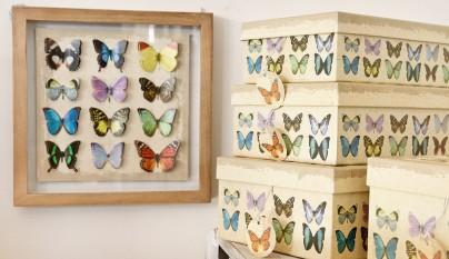 muy mucho mariposas cuadro 2