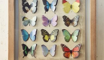 muy mucho mariposas cuadro 4