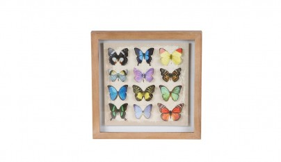 muy mucho mariposas cuadro