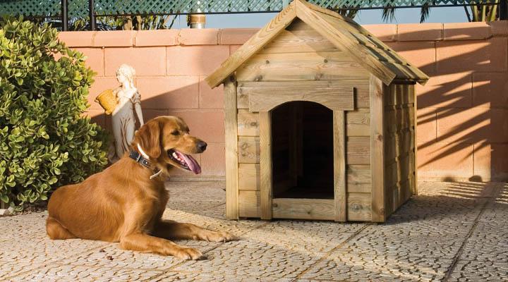 caseta para el perro