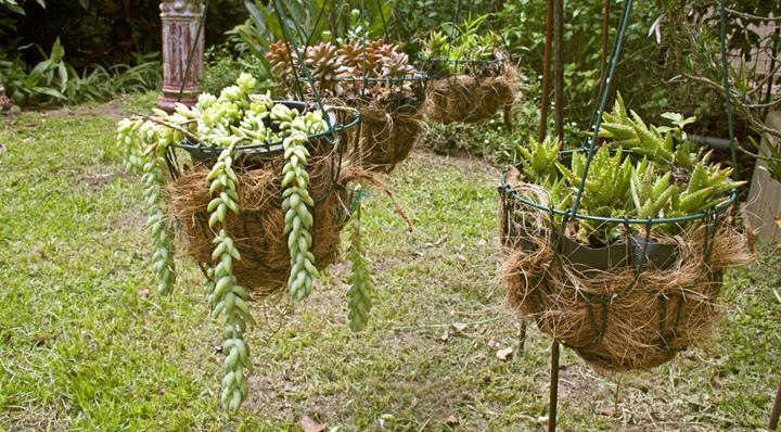 un hogar que las plantas colgantes las flores llenan de vida un hogar