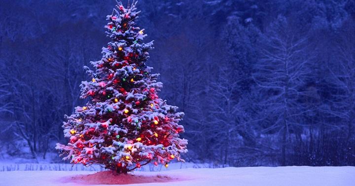 Arbol de Navidad en el jardin
