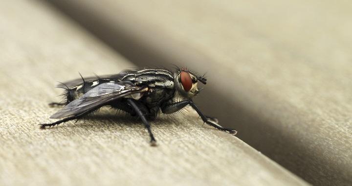 remedios moscas