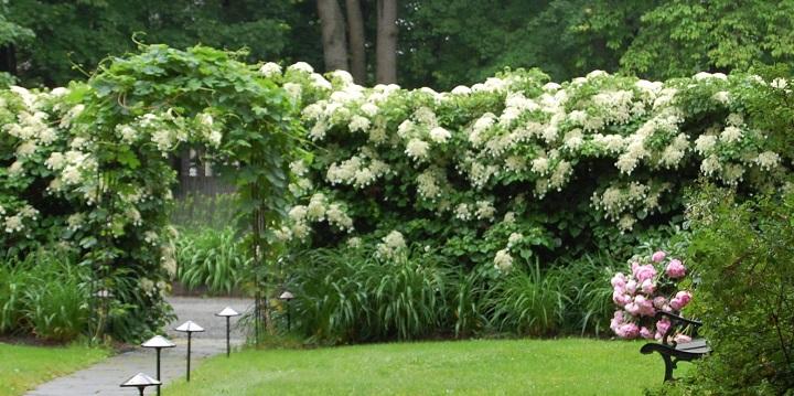 plantas trepadoras decoracion2
