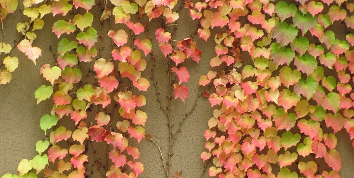 plantas trepadoras decoracion3