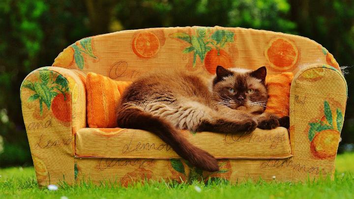 consejos para elegir sofa1