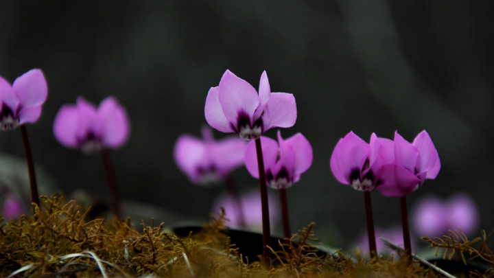 flores para el invierno