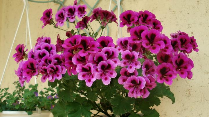 Las mejores plantas para el invierno for Plantas de invierno exterior