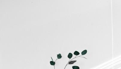 Decoracion eucalipto 14