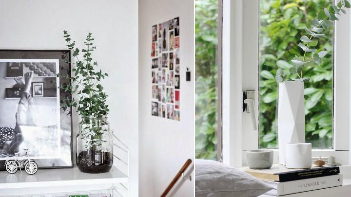 ideas decorar eucalipto2