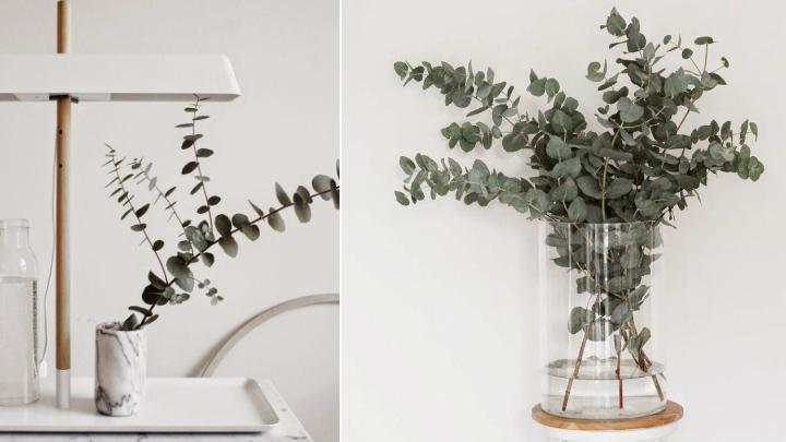 ideas decorar eucalipto3