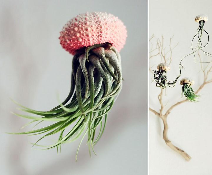 maceta medusa