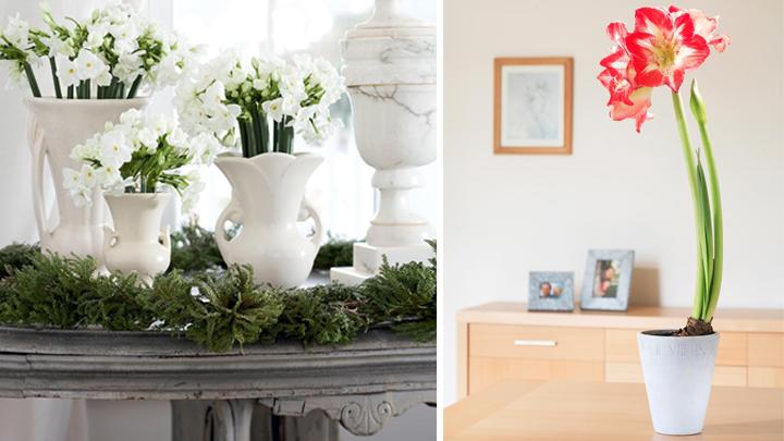 Decorar la casa con flores en invierno - Flores para decorar la casa ...