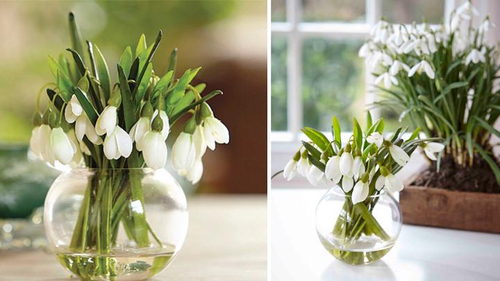 decorar casa flores invierno