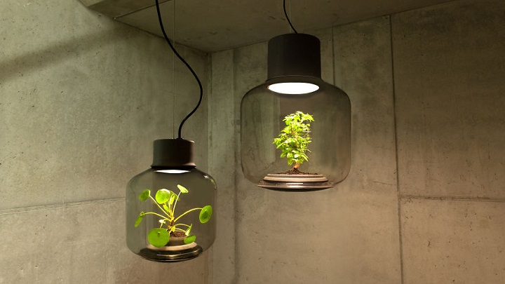 lamparas cultivando plantas 1