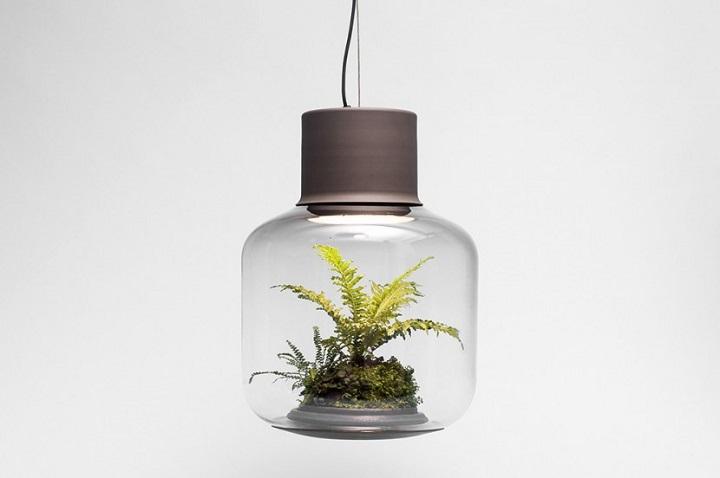 lamparas cultivando plantas 10