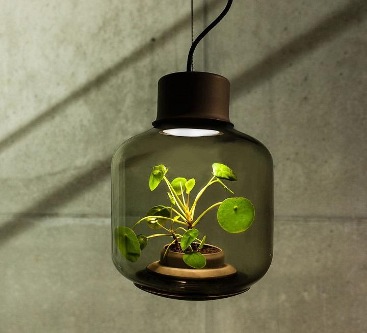 lamparas cultivando plantas 2
