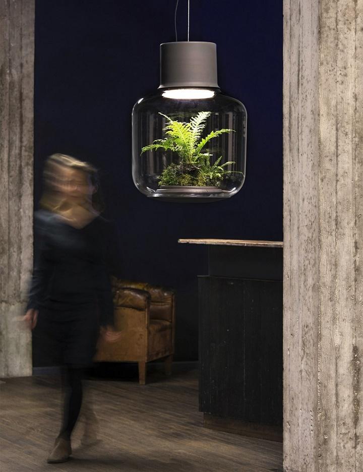 lamparas cultivando plantas 8