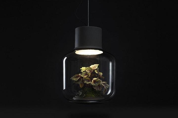 lamparas cultivando plantas 9