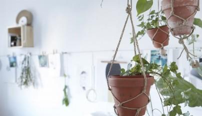 Ideas plantas dormitorio 1