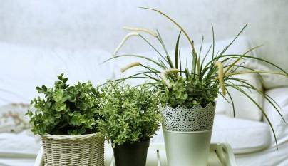 Ideas plantas dormitorio 5