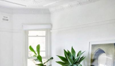 Ideas plantas dormitorio 6