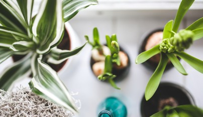 Ideas plantas dormitorio 9