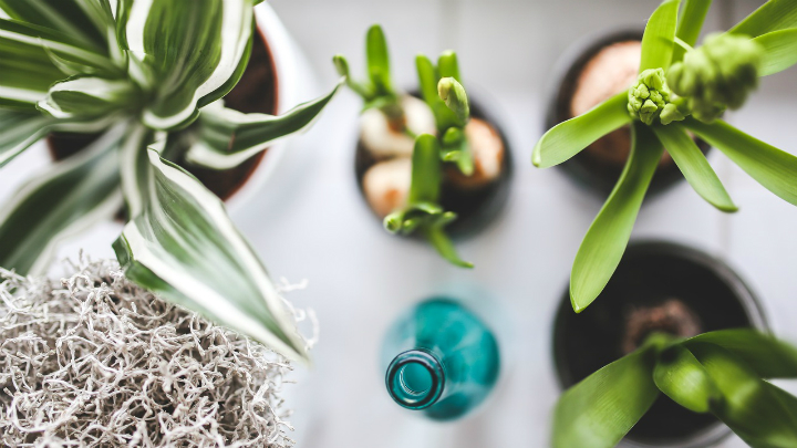 plantas dormitorio decoracion2
