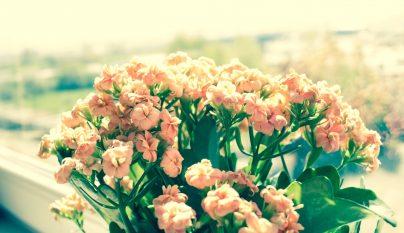 Ideas plantas alegria 10