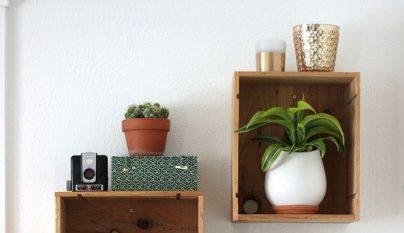 Ideas plantas alegria 16