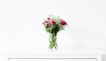 Ideas plantas alegria 4