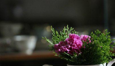 Ideas plantas alegria 7